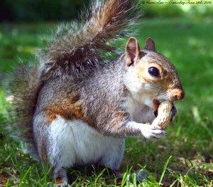 Them squirrels love them peanuts