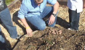 The ten year old never knew that potatoes were planted to grow potatoes.