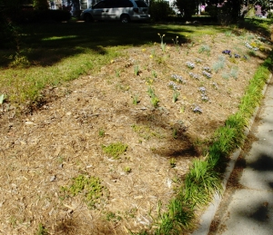 An alternative solution to mowing a bank--cover it with cypress chips and plant neat stuff!