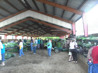 Lots and lots of plants for the Chieftans sale.
