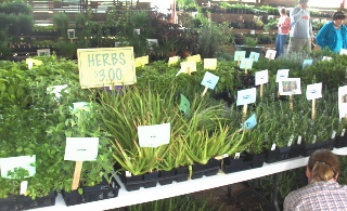 Thousands of plants were set up in categories with tags and pictures