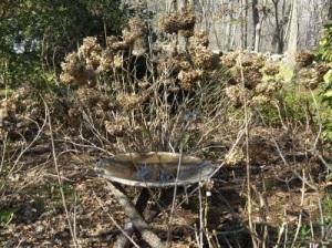 This birdbath was a visual treat in early march