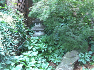 The rock led my attention through the lenten rose and threadleaf maple to the pagoda.  serendipity