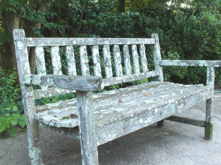How to cultivate a lichen garden on an old bench?  Neglect it.