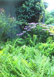 "woods fern, pink ""lace cap"" hydrangea and climbing hydrangea in an arrangement"