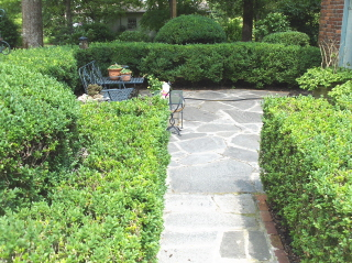 Manicured boxwoods lead to a slate patio