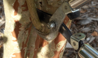 cutting unwanted stems from a crape myrtle trunk