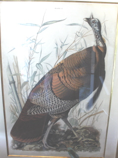 Turkey, an early Audubon print