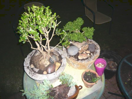 The bonsai project works out well