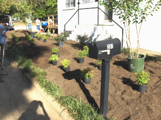 Plants laid out and ready for installation