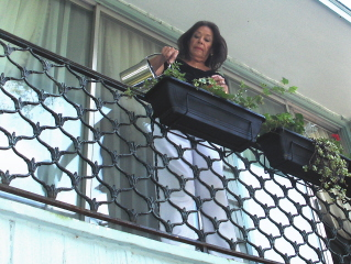 Watering the plants on the upper front landing.