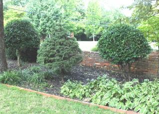 topiaries in the garden border