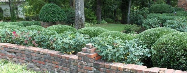 Pruned knockout roses on September 3