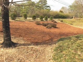 bed mulched with pine straw.  It already looks better