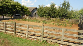 The Gentleman Farmer's vegetable garden--planted late but holds much promise