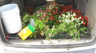 Leftover plants in the white Dodge mini van