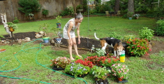 Dekie and the coon dog check out the flowers and fertilizer