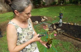 Prune the leggy plants before planting even if it means losing a few flowers. You will be rewarded with many more.