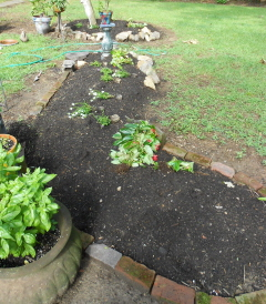 I like to lay out the background first. Dragon wing begonias will do fine.