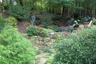 Flagstone steps lead past the waterfall to the back yard deck