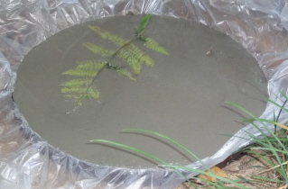 The fern will look like a fossil in the finished stepping stone