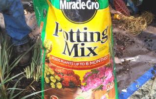 A good potting mix ensures success