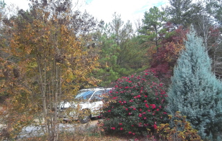 Crape myrtle for shade in summer and light in winter