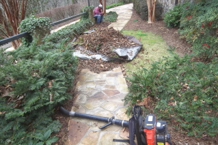 deep cleaning the flower and shrub beds