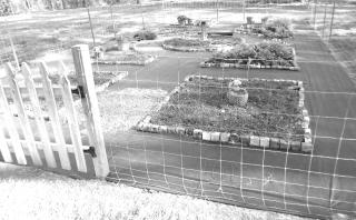 A designer vegetable garden in progress