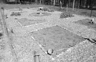 Designer vegetable garden with weed free pathway of cypress mulch