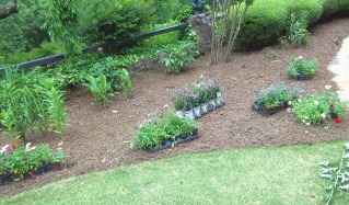 getting a design concept for flower beds