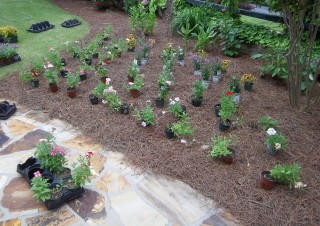 place-plants-exactly-where-they-will-be-planted.jpg