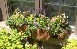 finished window box day of planting