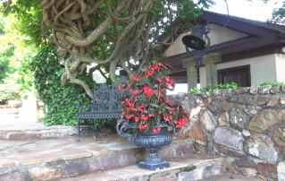 begonia container at entrance