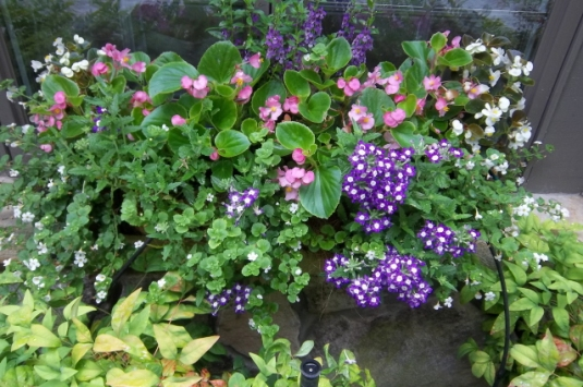 container color 10--A multi color window box