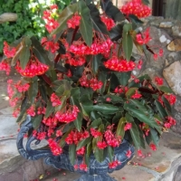 Plants in containers for summer color