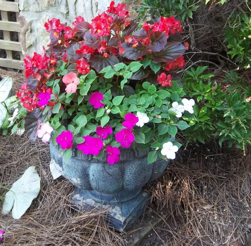 container color 5-begonias and impatiens for shade