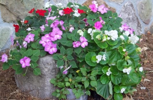container color 7-begonias and impatiens for shade
