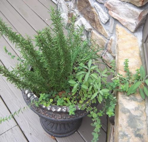 container color 9-A compact herb garden