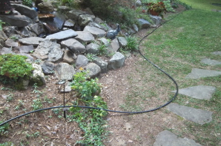 drip irrigation tubing laid out for installation