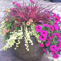 Mixed container plantings for summer color-part 3 of a series.