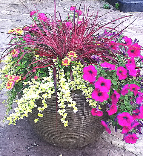 ornamental grass, petunia, and a trailing plant give a good Ikebana effect.