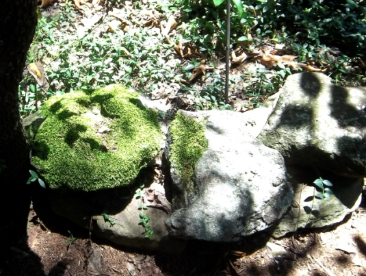no problem growing moss on rocks in the shade