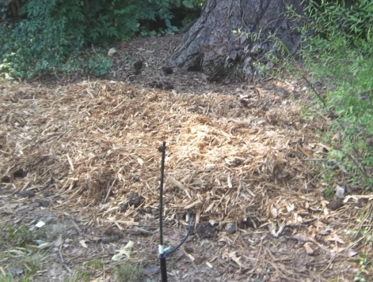 shade garden --rake out the planting area and mulch with cypress chips.