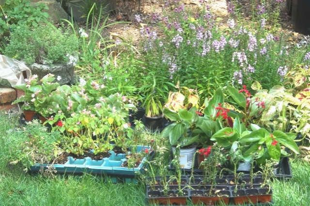 Collected plants for the shady border flower bed