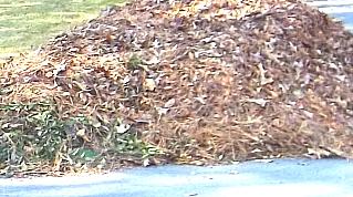 leaves on Oakwood Street