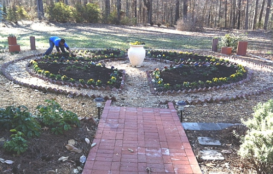 Finishing the tulip planting job