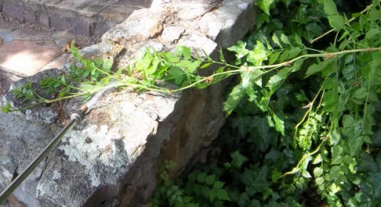 Lay a vine out from desirable material and spray the foliage.