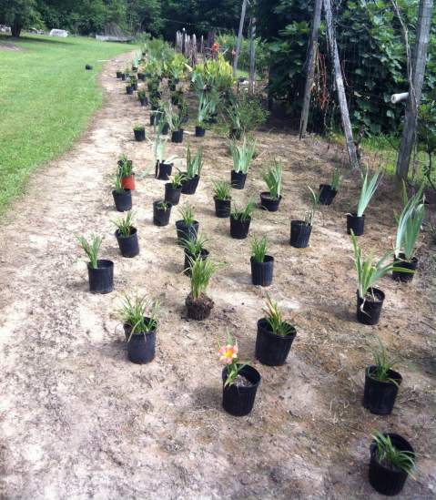 The plants are arranged carefully and ready to be planted exactly where they sit.