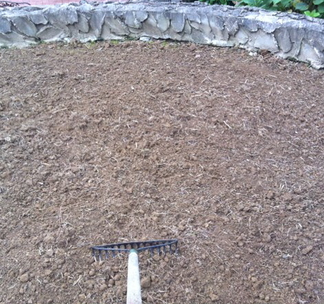 using a rake to prepare for a sod installation